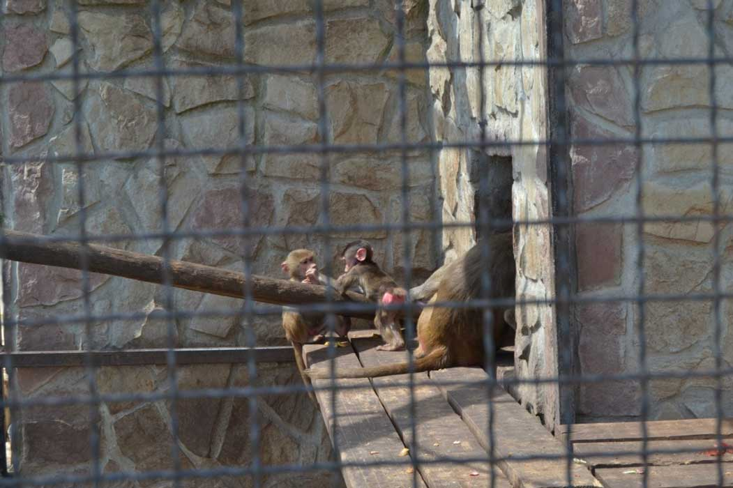 Зоопарк Трускавець Лімпопо